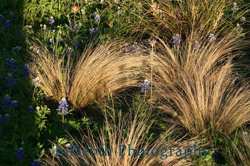 5686 - Wild flowers