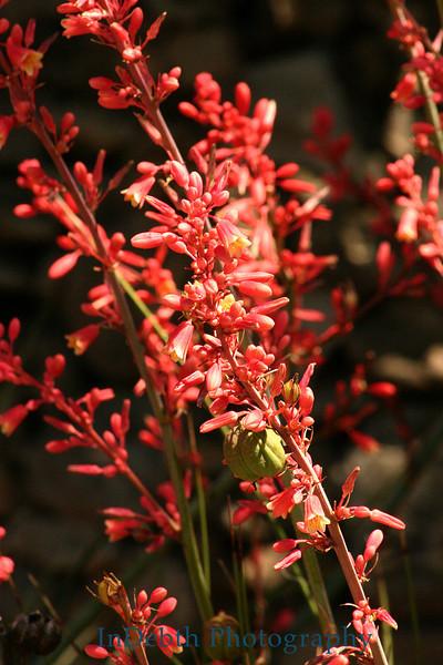 7481 - Cactus Flower