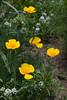 Flower_MG_4001