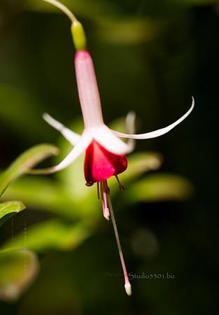 red white long flower stamen 3423cf detEx hd28vin