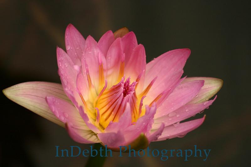 4565 - Water Flower