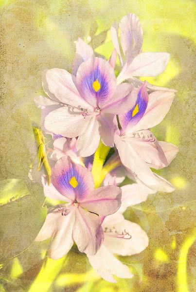 _DLS1006 flowers2