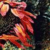 flowerust vers 1