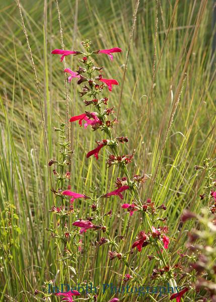1652 - Wild Flowers