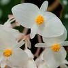 US Botanic Garden-15