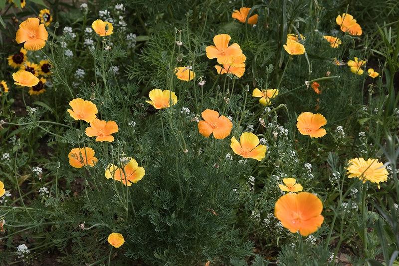 Flowers_MG_4301