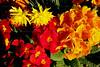 CRay-Flowers-9951