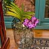 Vanda Taweewan Orchid