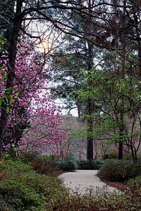 """""""The Garden Path"""""""