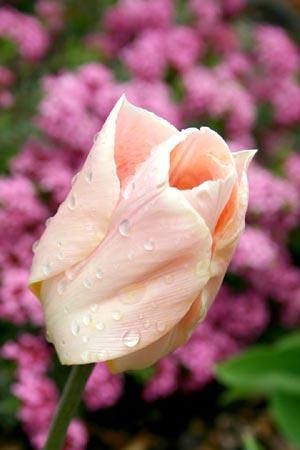 Flower3_8083
