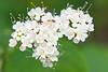 flower smugmug (9 of 26)
