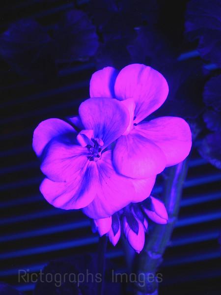 Black Light Flower