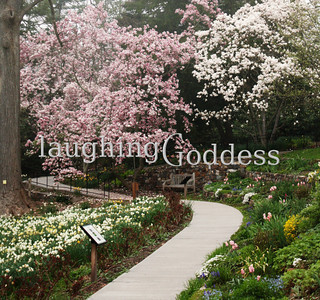 Title: Magnolia Path Summit, NJ