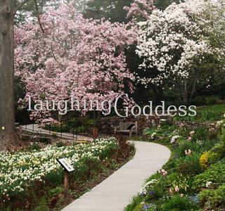 Title: Magnolia Path Summit, NJ