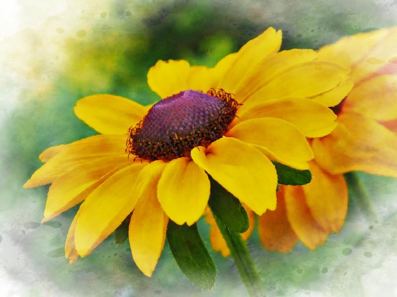 tiger eye Bee closeups 022
