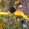 Daniel Stowe Botanical Garden, Belmont NC, near Charlotte NC