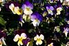 CRay-Flowers-9913