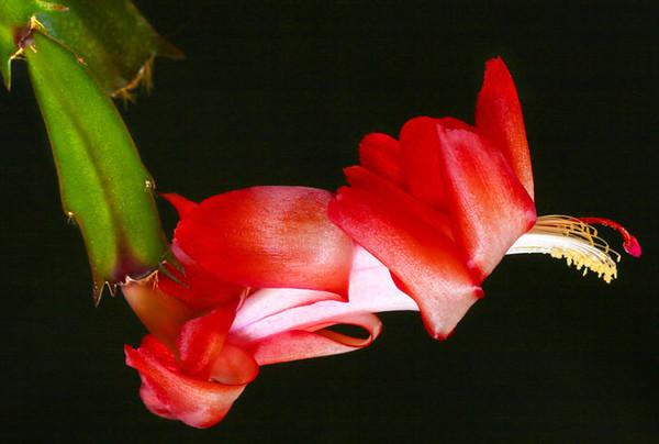 Flower_0384