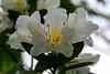 CRay-Flowers-0699