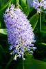 CRay-Flowers--3