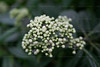 CRay-Flowers-0701