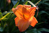 Flowers_MG_4426 copy