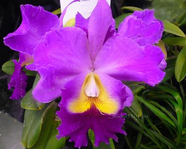 Purple Yellow