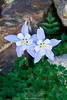 Lone Columbine's High in the Fletcher Mountains