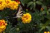20060904-132935_30D_Flowers_0112