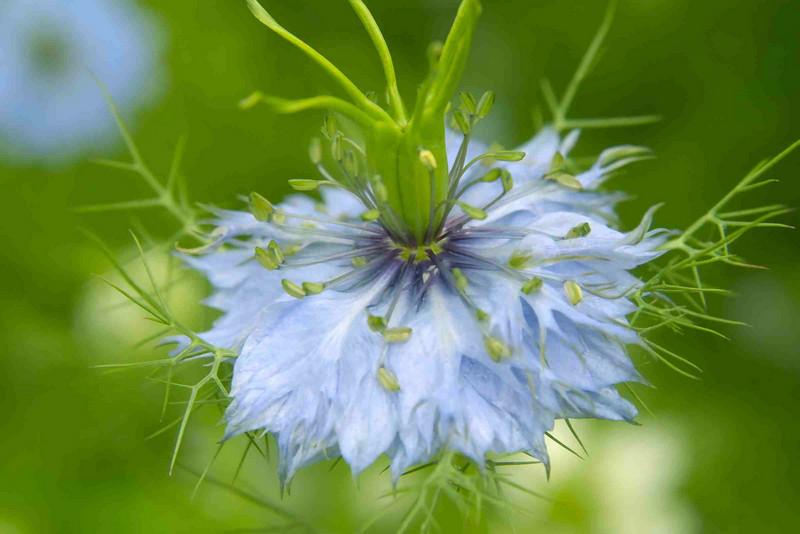 Brenda's flower 001