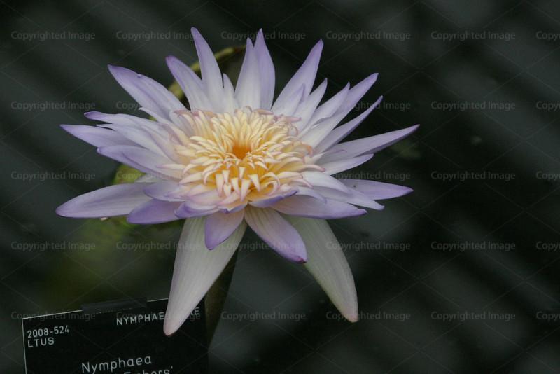 CRay-Flowers-0798