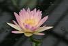 CRay-Flowers-0799