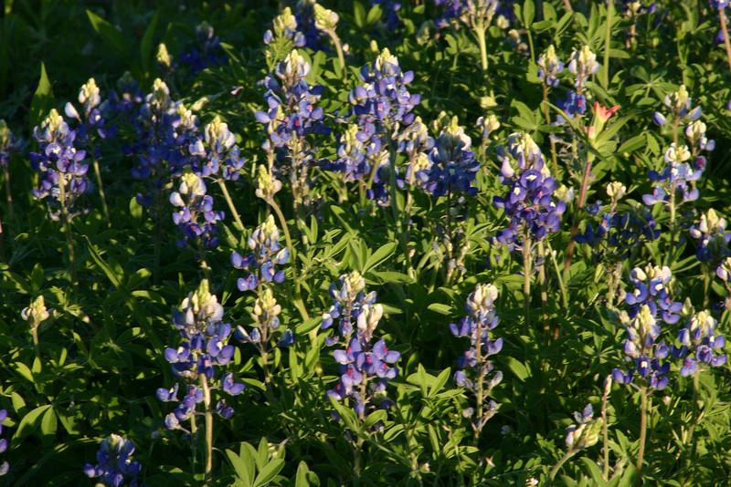 5690 - Wild flowers