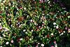 CRay-Flowers-0025