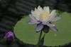 CRay-Flowers-0801