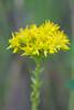 flower smugmug (26 of 26)