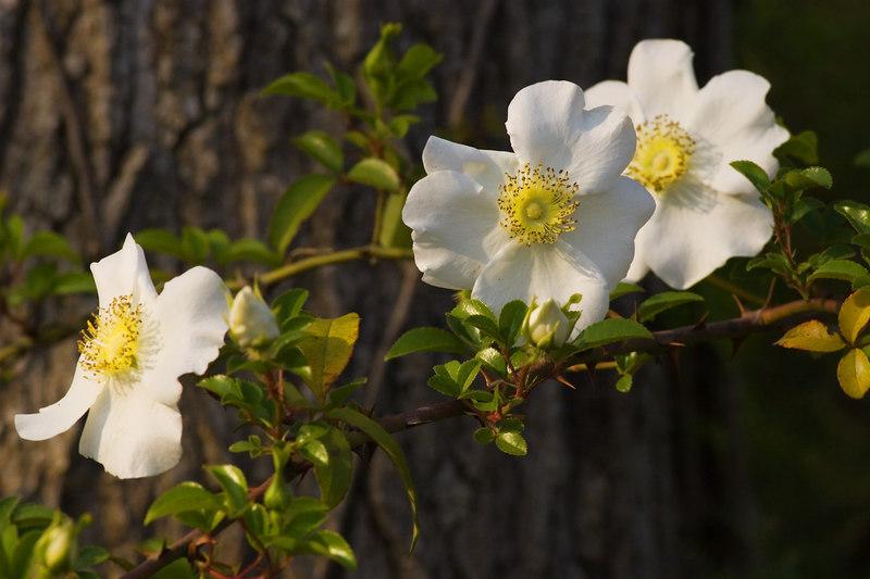 Magnolia Gardens Rookery, Charleston, SC