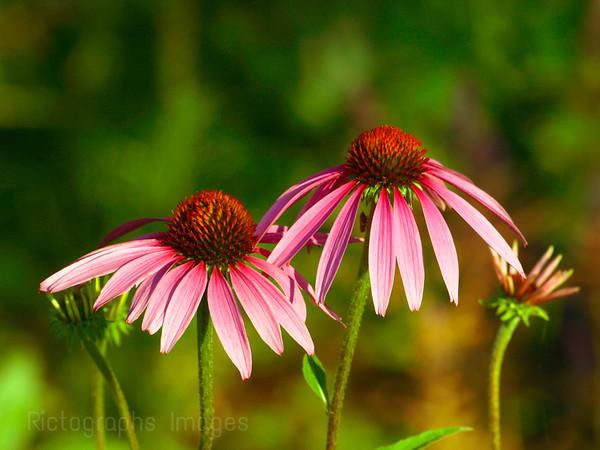 Garden Flower Beauty