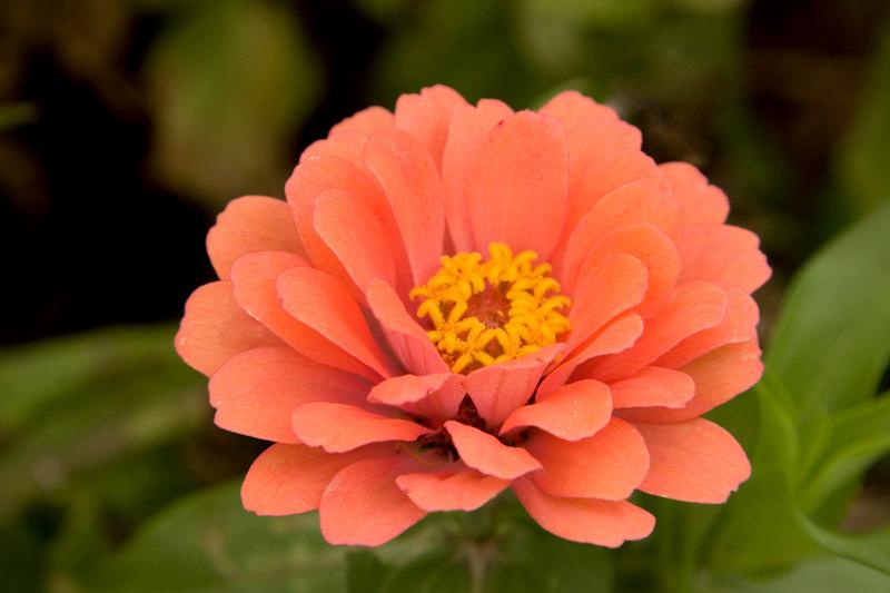 Flowers_MG_5317 copy