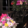 Shadow smelling the flowers! 20 years old.