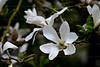 CRay-Flowers-6873