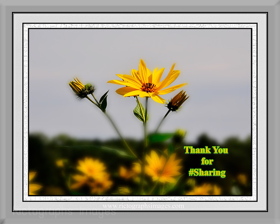 Thank You for #Sharing Photography   Rictographs Images