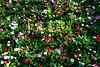 CRay-Flowers-9922