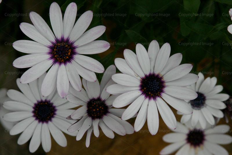 CRay-Flowers-0739