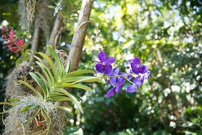 It is amazing how many orchids there are with different colors and patterns.
