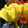 Duke Gardens- Easter 2009 130