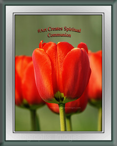 #Photo #Quote, Red Tulips,  Rictographs Images, #Photo
