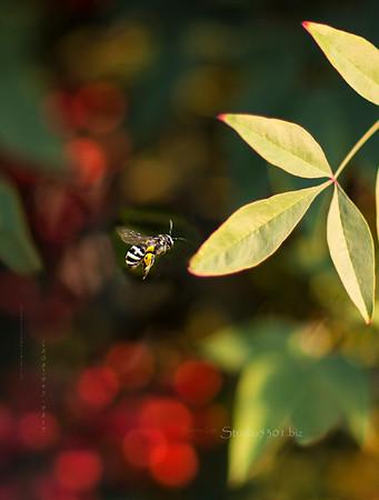 Bee & berries 259
