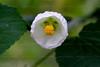 CRay-Flowers-0725