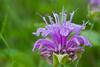 flower smugmug (22 of 26)